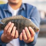 Comment cuire du poisson tout droit sorti du congélateur